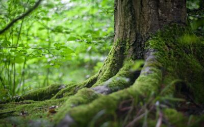 Feniksbossen: een alternatieve gedenkplaats voor overledenen